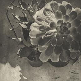 Ausstellungseröffnung der Photographischen Sammlung
